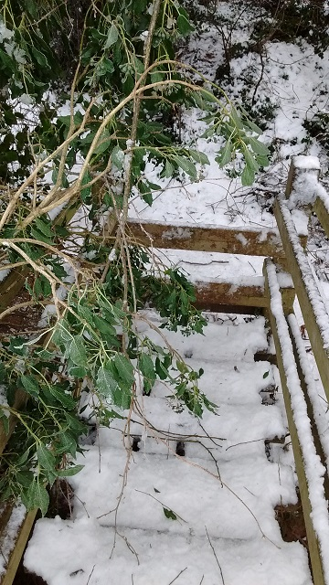 Branches across Ayles Brook bridge