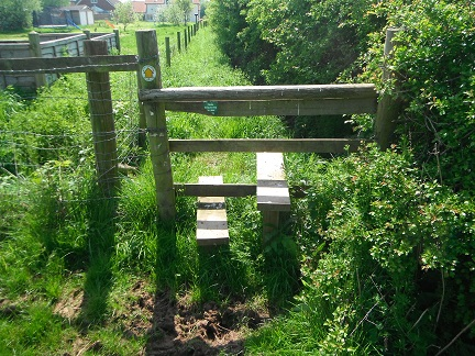 HO10 path in need of strimming from stile (SO 52384 43197) to Shelwick Lane