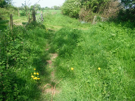 HO18 Bridleway - section nearest to the Roman Road will need strimming soon