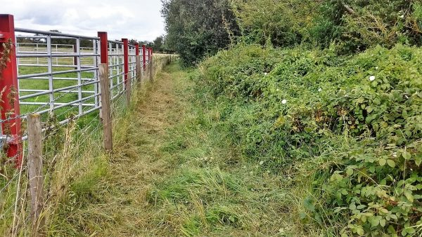 HO18 Bridleway - after strimming (2)19.08.19