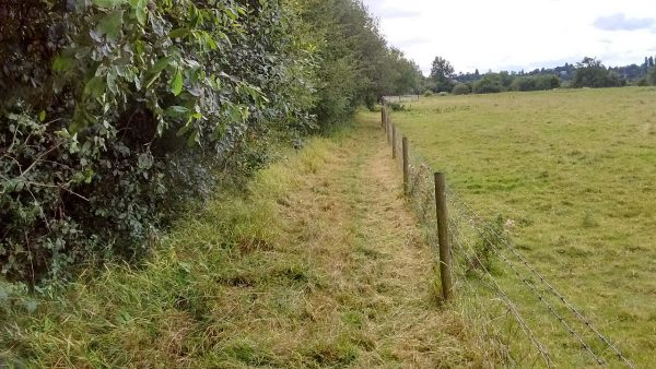 HO18 Bridleway - after strimming (3)19.08.19